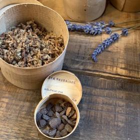 Boîte ancienne en bois d'herboristerie - Echantillon de plante, graine, écorce