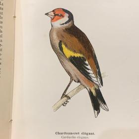 Pocket Atlas: Useful and Harmful Birds of France - 1898