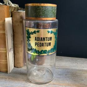Adiantum Pedatum - Flacon de pharmacie fin XIXème - Fougère capillaire du Canada