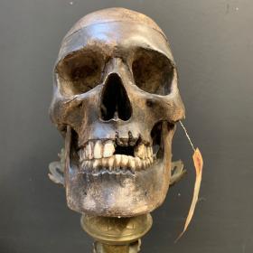 Crâne humain - Réplique par l'artiste Jérôme Cavailles