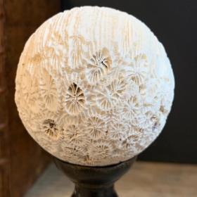 Boule de corail - Pocillopora meandrina sur socle en bois tourné - Modèle A