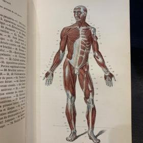 Anthropology - Study of organs - Anatomical Atlas - 1870