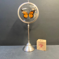 Magnifying Glass Butterfly: Danaus Plexippus - Monarch - Naturalist Magnifier