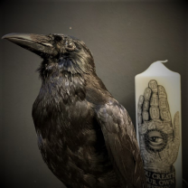 Vanitas: Crow on human skull replica on base