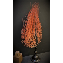 Flame gorgon - Red Whip Coral on pedestal - Ellisella grandis