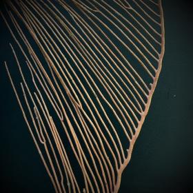Gorgone Lyre sur socle - Ctenocella pectinata des Philippines