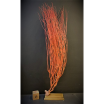 Red Sea Whip Coral on brass stand - Ellisella grandis - Sulawesi Island