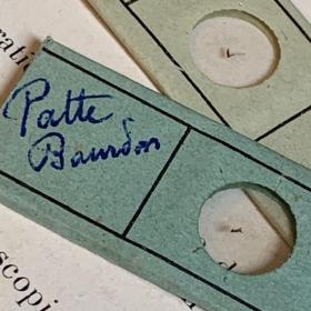 Antique preparation slide for microscope - OPTICO