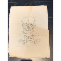 Antique engraving 1779 - Jacques Gamelin - Head (skull)