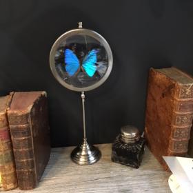 Naturalist frame magnyfier: morpho aega