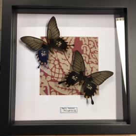 Cadre entomologique - Papilio memnon