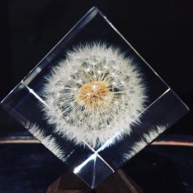 Sola Cube: Inclusion botanique et minérale