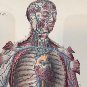 """Planche anatomique """"Le corps de l'Homme"""" 1854"""