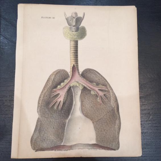 """Anatomical study """"Le corps de l'Homme"""""""