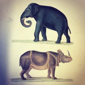 Livres: Oeuvres complètes de BUFFON 1837 (5 tomes)