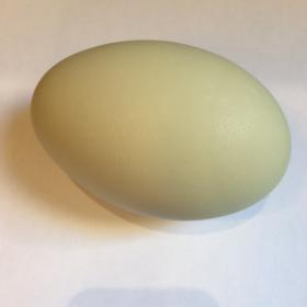Swan's egg