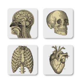 Biology Coasters