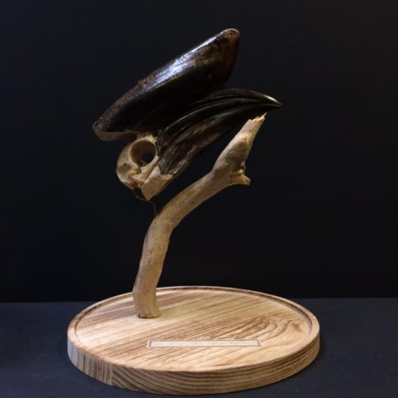 Black-casqued Hornbill skull under bell
