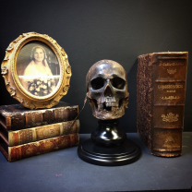 Human skull artist reproduction: J.César