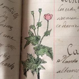 """Cahier ancien: """"cours de botanique"""" 1901/1903"""