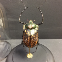Scarab under a bell