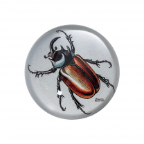 Paperweight - Beetle