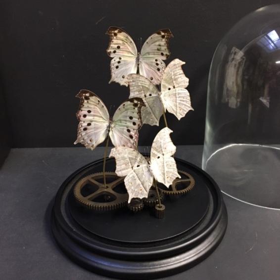 Envolée de papillons steampunk Salamis parhassus