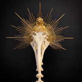 Théophile - Montage ostéologique - Réalisation I Will Never Die