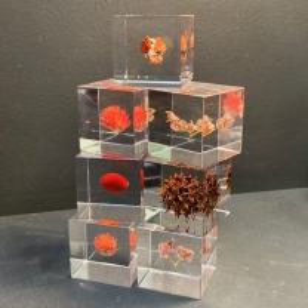 Sola Cube: Inclusion botanique