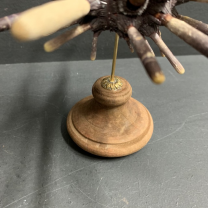 Pencil sea urchin on wooden stand